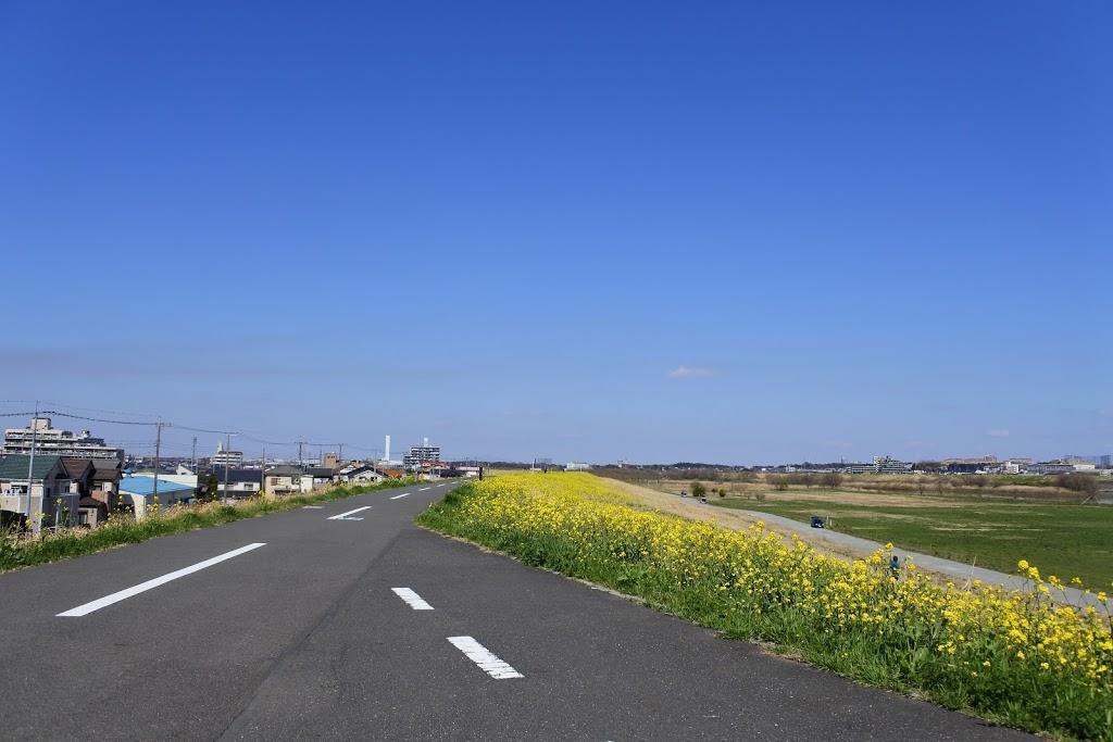【江戸川】菜の花とルノーウルトラライト7トリプルとNikon1 J5