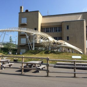 自転車・ロードバイクで47都道府県制覇の道:1/47 千葉県