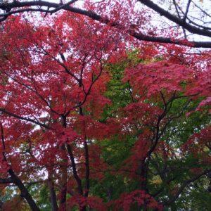 昭和記念公園で紅葉狩り